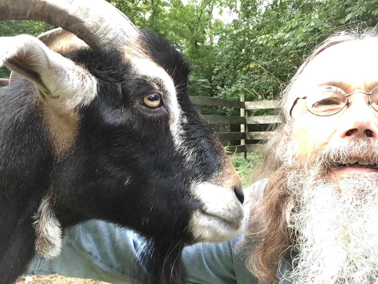 A goat at the Sanctuary.